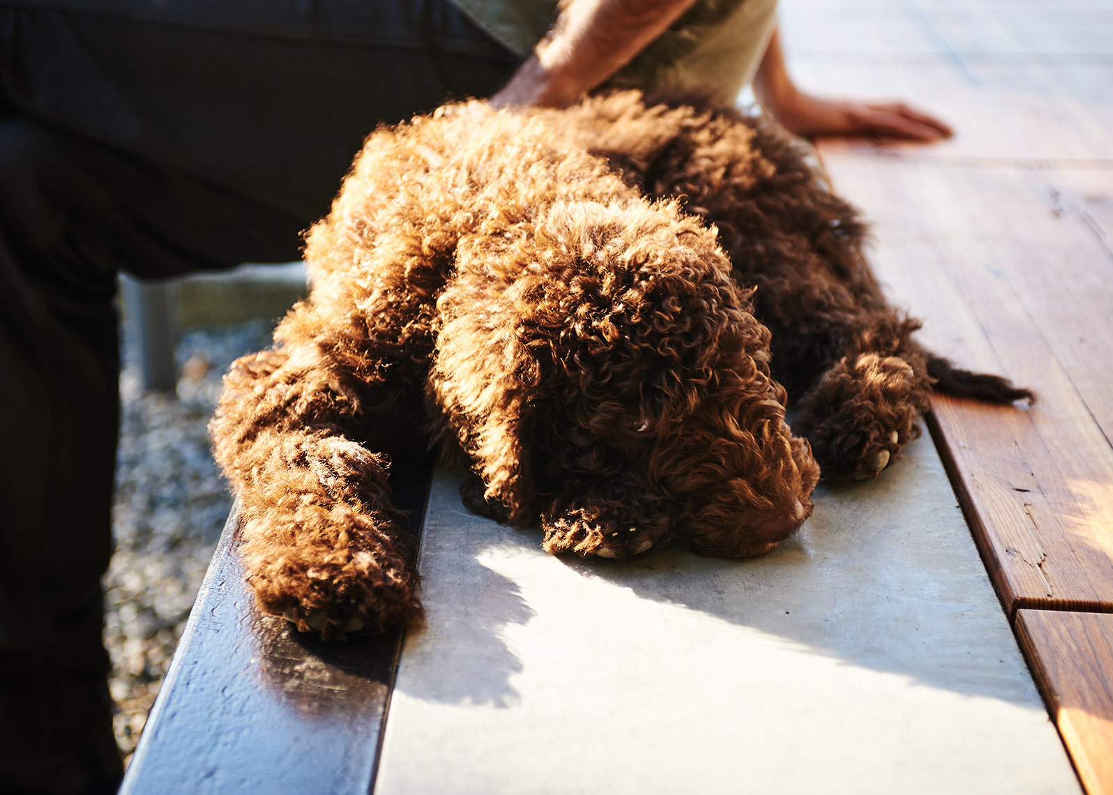 detail of a dog soaking in the rays during photoshoot