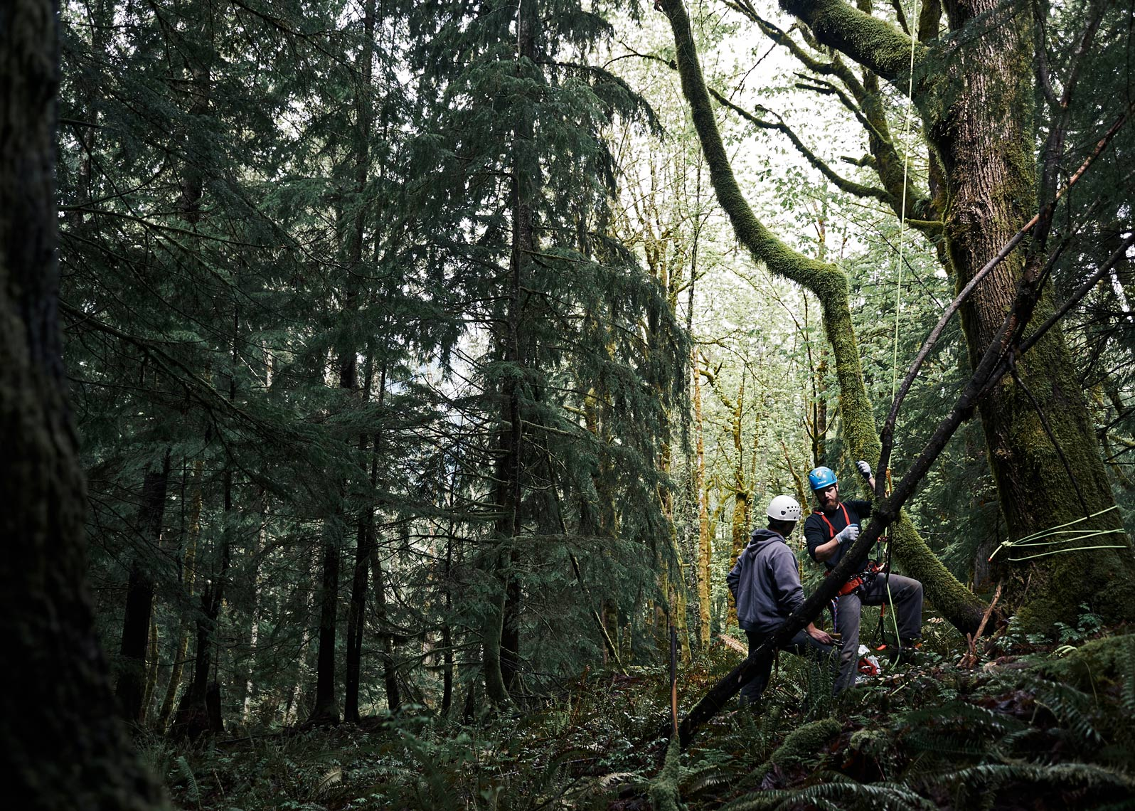 Tree climbers are photographed in this environmental workplace photo