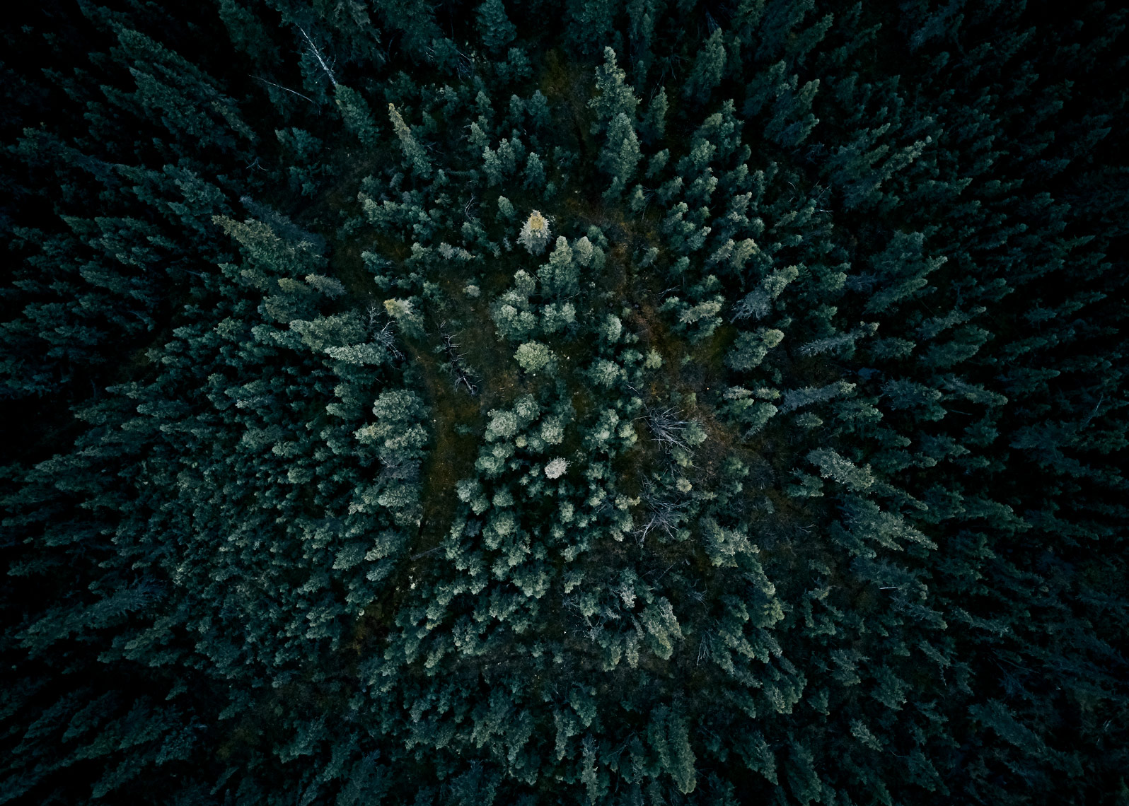 Forest scene captured from a drone